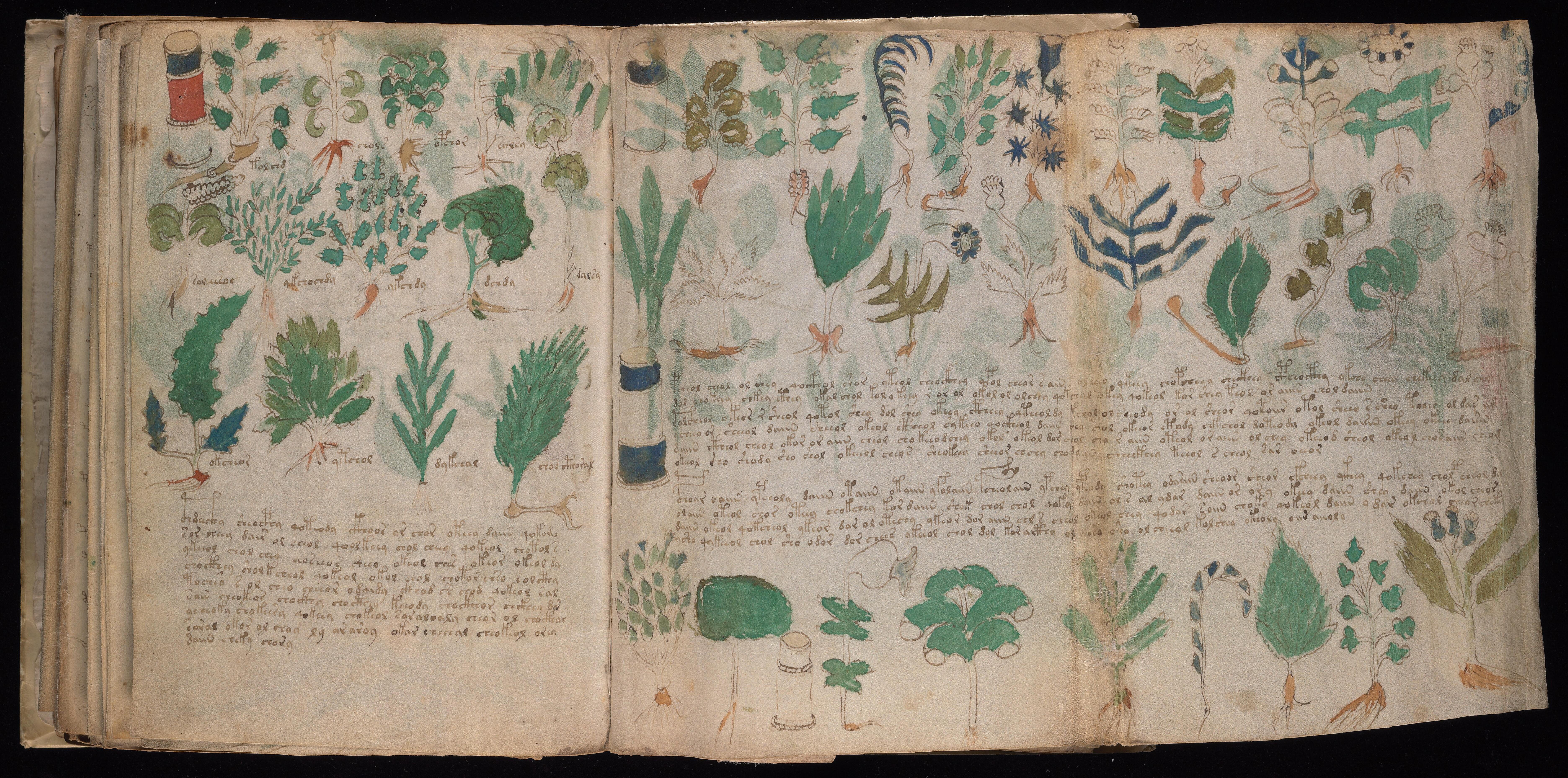 Illuminating the Illuminated: A First Look at the Voynich Manuscript