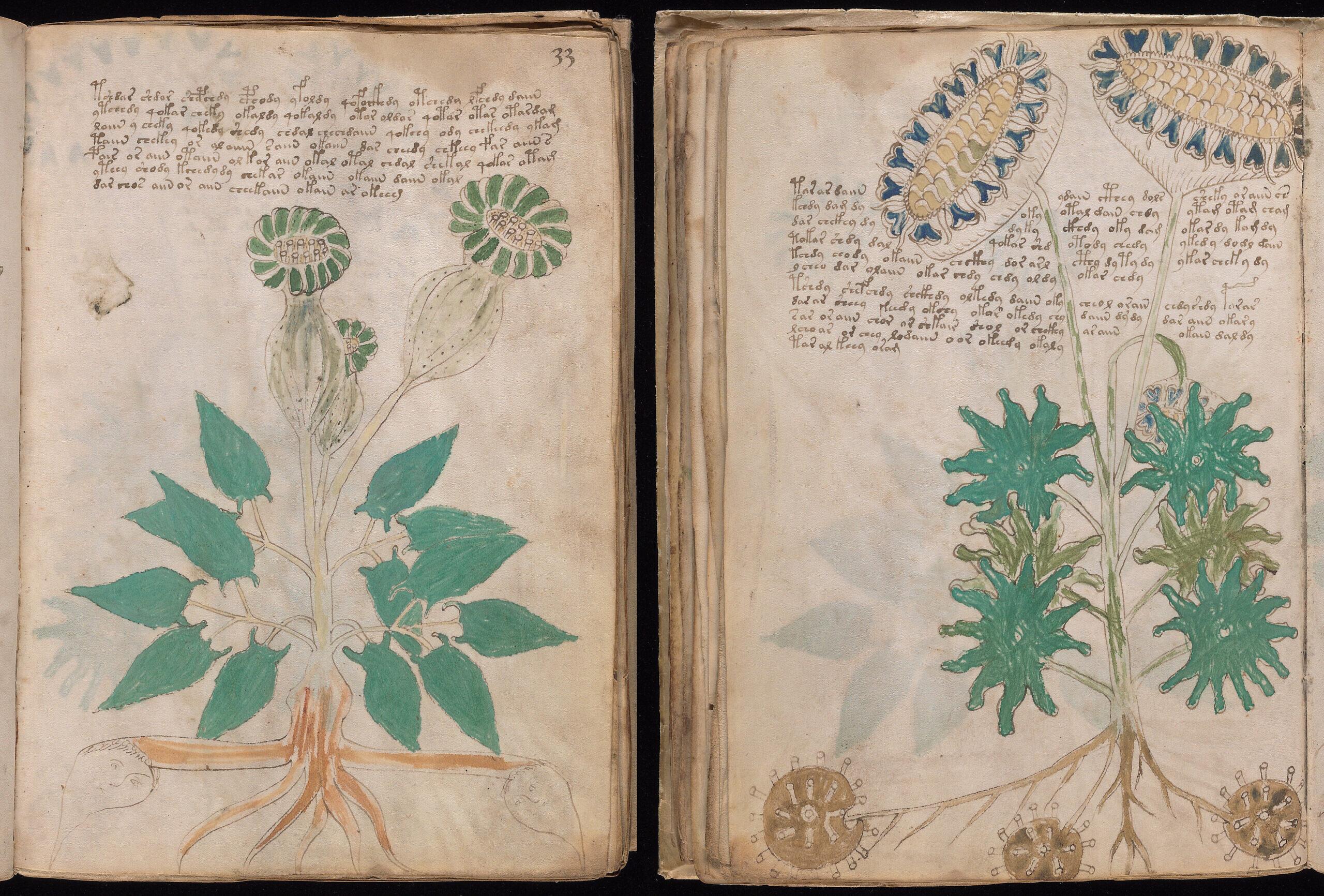 Voynich Folio 33