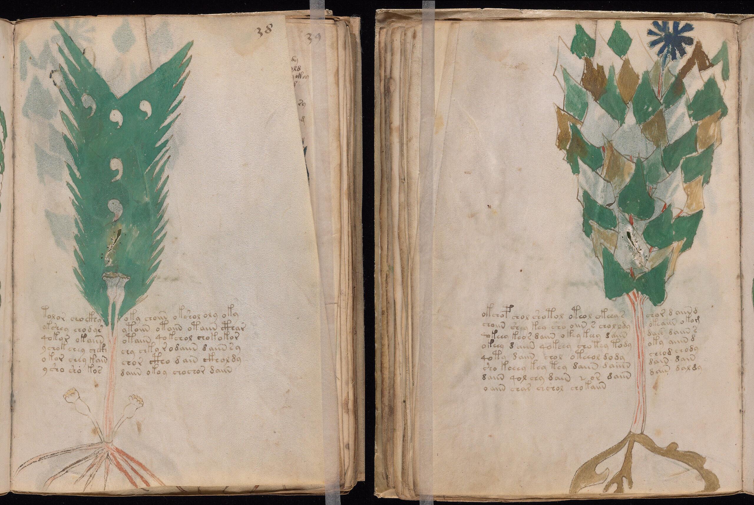 Voynich Folio 38